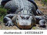 An Alligator Is A Crocodilian...