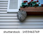 Hornet Nest On House Window