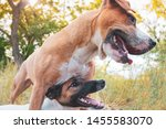 happy playful dogs in the... | Shutterstock . vector #1455583070