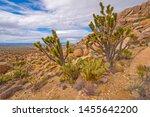 Desert Floral Display On...