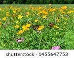 Monarch Butterfly In A...