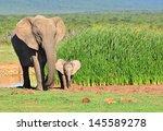 Elephants   26