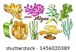 collection algae seaweed coral... | Shutterstock .eps vector #1456020389