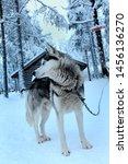 Rovaniemi  Finland December 22...