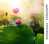 Beautiful Lotus Flower In...