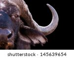 close up image of an african... | Shutterstock . vector #145639654