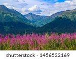 Fireweed In Anchorage Alaska I...