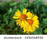 Two Yellow Color Flowers Just...