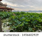 The beautiful landscape scenery of Xihu West Lake and pavilion in Hangzhou CHINA. China Hangzhou west lake(Xihu) Lotus in the evening