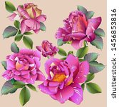 roses. very beautiful and... | Shutterstock .eps vector #1456853816