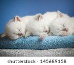 Stock photo three sleeping kittens on towel 145689158