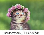 Stock photo portrait of cute dreaming little kitten crowned with a chaplet of clover 145709234