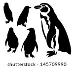 black and white penguin vector... | Shutterstock .eps vector #145709990
