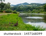 Ducks Near Poprad River In...