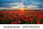 Panorama Of A Field Of Red...