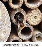 Apoidea, Hymenoptera, Insect hotel, wildlife