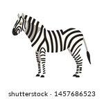 zebra isolated on white...   Shutterstock . vector #1457686523