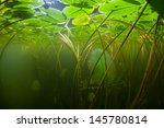 Lilies And Other Aquatic...