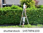 Small photo of SOEST, NETHERLANDS - July 2, 2019. Professional workman with headset is trimming laurel hedge in green garden with electric equipment, other man is holding ladder at workplace for accident prevention.