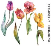 Tulips Floral Botanical Flowers....