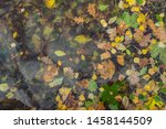 Multicolored Fallen Leaves And...