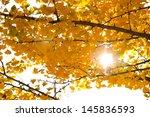 autumn tree and sunlight on... | Shutterstock . vector #145836593