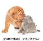 Mastiff Puppy Dog Kissing...