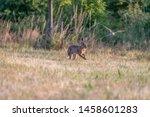 Stock photo european rabbit in grass rabbit running in the field 1458601283