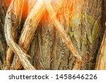 beautiful intertwined tree... | Shutterstock . vector #1458646226