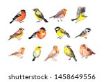 Stock photo big set of birds robin tit finch sparrow other small wild and domestic bird watercolor 1458649556