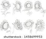 sunflower hand drawn vintage... | Shutterstock .eps vector #1458699953