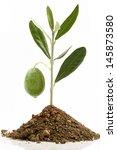 Seedling Olive And Olive Green