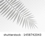 the transparent shadow overlay... | Shutterstock .eps vector #1458742043