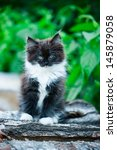 Stock photo adorable kitten outdoor 145879058