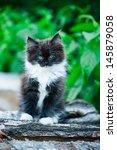 Stock photo adorable kitten outdoor 145879058
