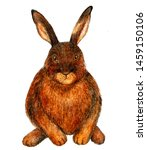 Stock photo european hare watercolor illustration hare sits forest dweller full face photo illustration 1459150106