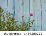 Background. Flowering Burdock...