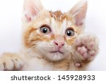 Stock photo cats 145928933
