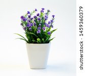 Small Green Plant With Purple...