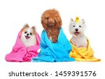 Three Dogs In Towels After...