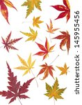 autumn maple leaves | Shutterstock . vector #145955456
