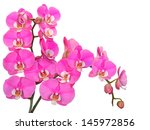 pink  spotted orchid branches... | Shutterstock . vector #145972856