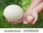 Compare Chicken And Ostrich...