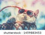 Portrait Of Funny Cat Wearing...