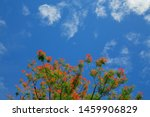 ornamental flowering red with... | Shutterstock . vector #1459906829