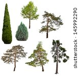 Set Of Seven Coniferous Trees...