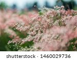 The Flowers Of The Light Pink...