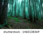 Magic Surreal Forest Landscape...