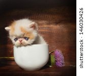 Stock photo kitten with a flower 146030426