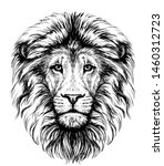 Lion. Sketchy  Graphical ...